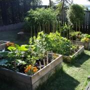 Veggie Garden Image by Hazel Owens via Flickr