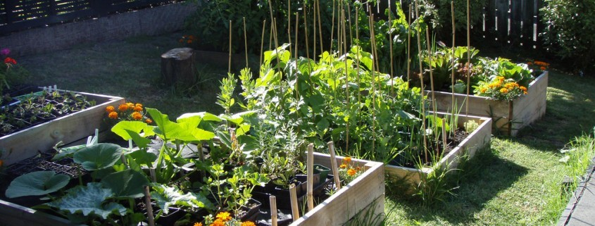 Veggie Garden Image by Hazel Owens via Flickr