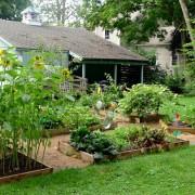 Backyard Garden at Home